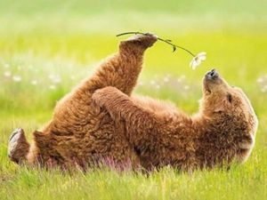 bear w flower